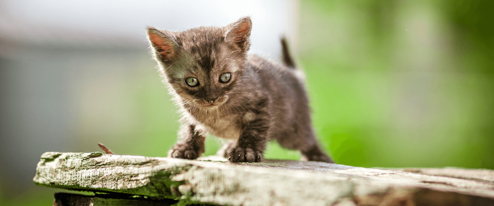 http://brookhurstanimal.com/wp-content/uploads/2016/09/cat-veterinarian-anaheim.png