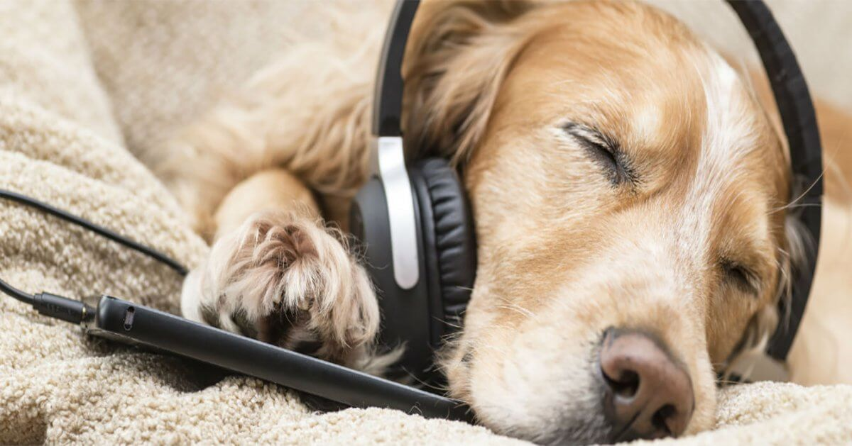do-our-pets-enjoy-music-1200x629.jpg