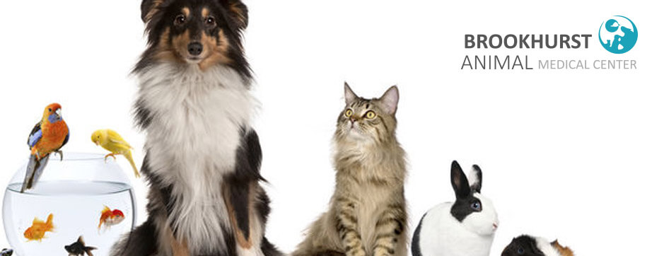 Organization-Tips-for-Living-with-Multiple-Pets.jpg