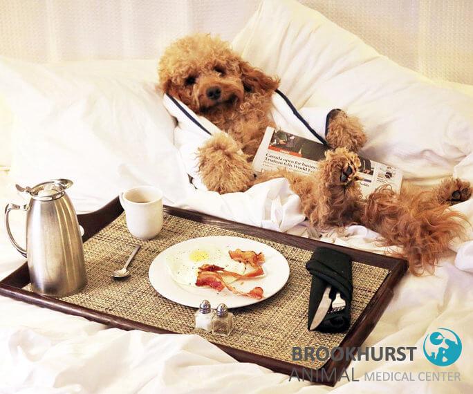 Pet-Friendly-Hotels-in-Orange-County.jpg