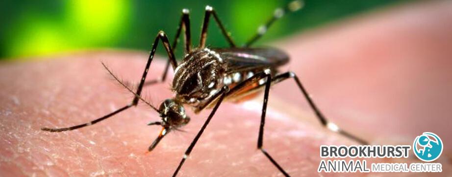Preventing-Mosquito-Bites-Heartworm-in-Orange-County.jpg