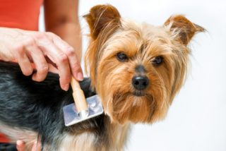 Anaheim pet grooming services