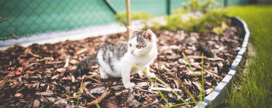Pet Wellness Exam in Anaheim