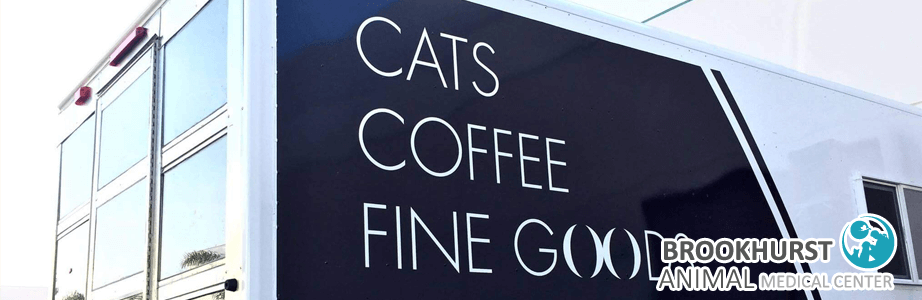 cats-coffee-fine.png