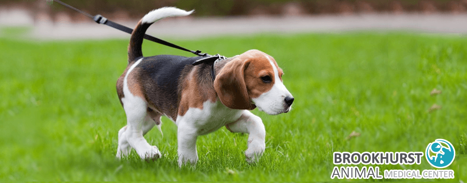 How-to-Walk-Your-Dog.png