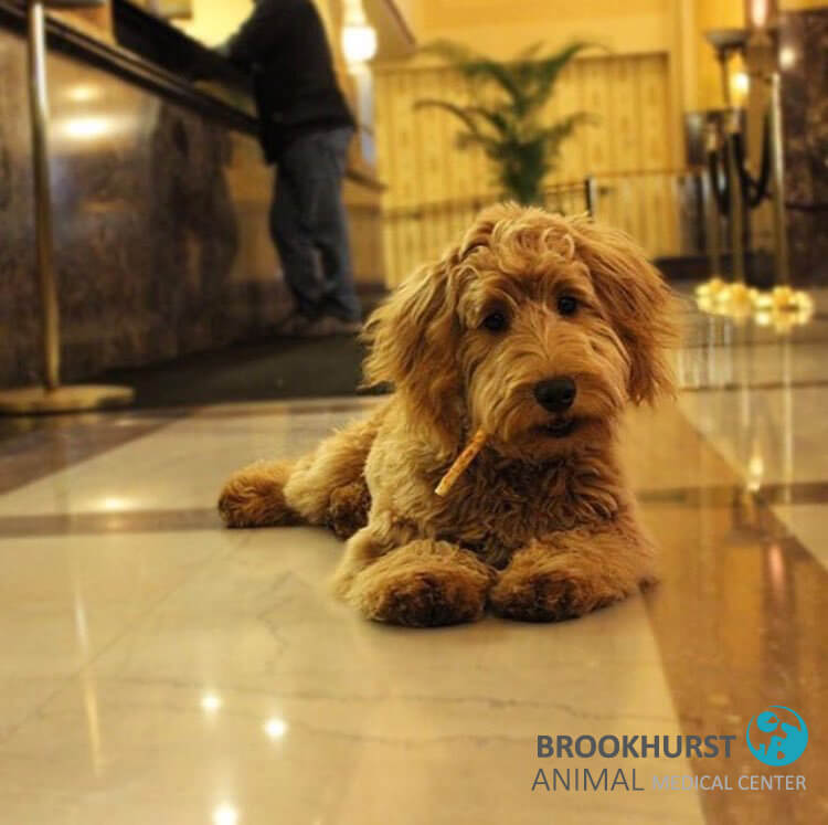 Pet-Friendly Hotels in Orange County 4
