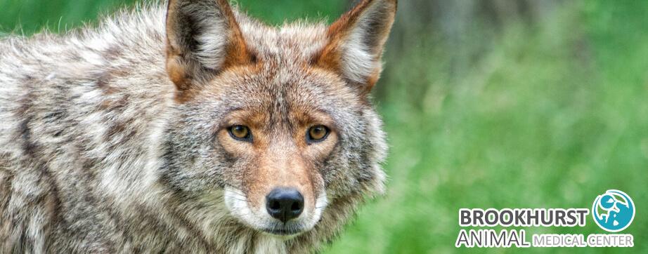 Pet Owner's Guide to Wild Animals in Anaheim 6