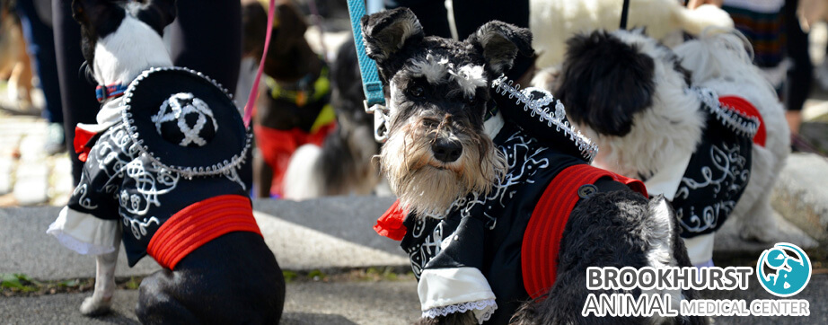 Dog-Friendly-Halloween-Activities-in-Orange-County.jpg