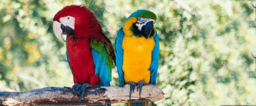 Bird Veterinarian in Anaheim