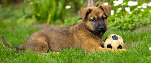 Veterinarian for Dogs in Anaheim