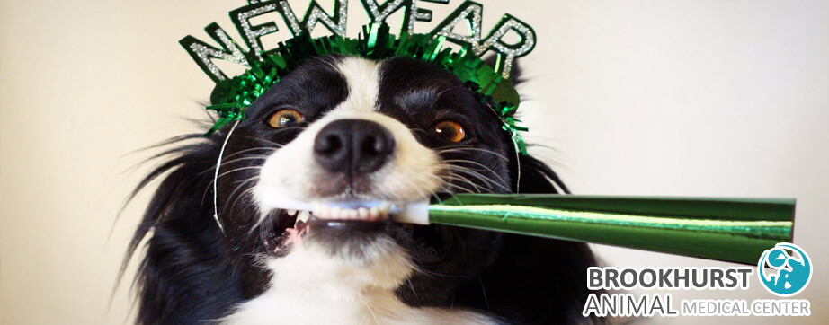 Celebrating-New-Year's-with-Your-Pets.jpg