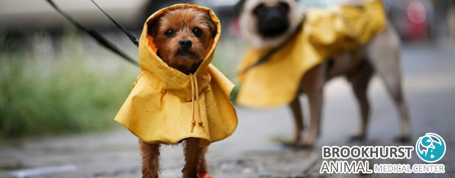 A-Vet's-Guide-to-Dog-Friendly-Rainy-Days.jpg