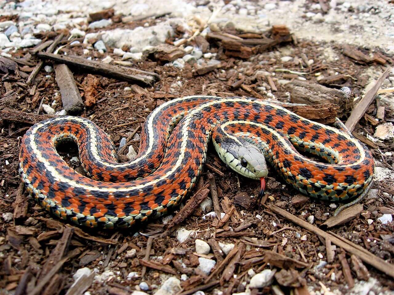 Snake Veterinarian