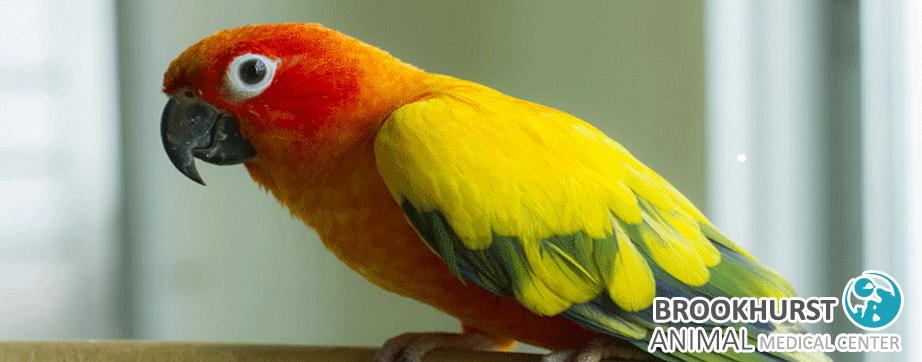 Is-My-Bird-Sick.jpg