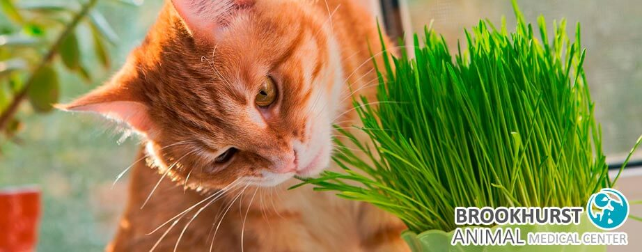 Why-Does-My-Pet-Eat-Grass.jpg