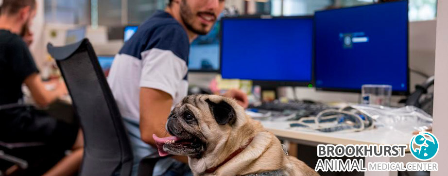 10-Tips-for-Bringing-Your-Dog-to-Work.jpg