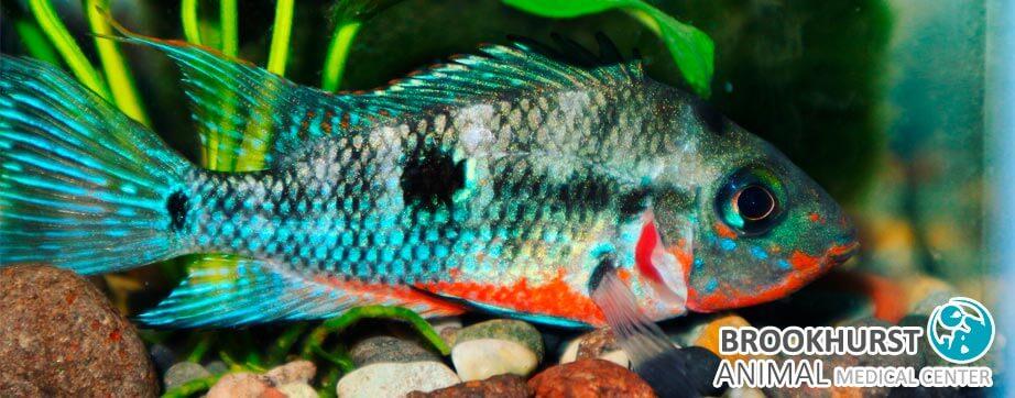 Fish-Shops-in-Anaheim-Orange-County-CA.jpg