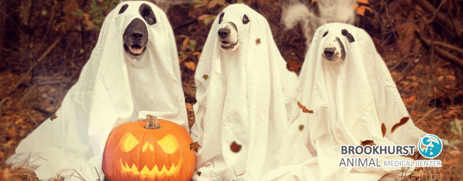 BAMC-pet-costumes.png